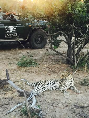 Inyati Game Lodge: The amazing norm at Inyati!