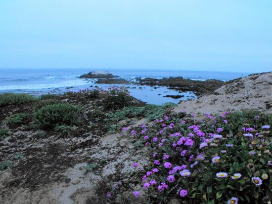Asilomar State Beach: Love this beach!