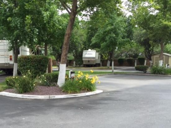 Corning, CA: Spring Flowers accent the parks Beauty