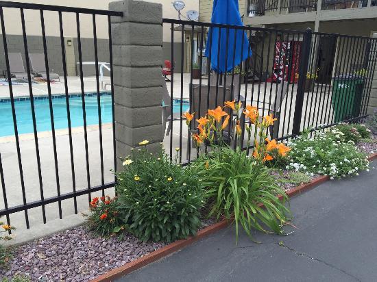 Corning, CA: More Spring Blooms