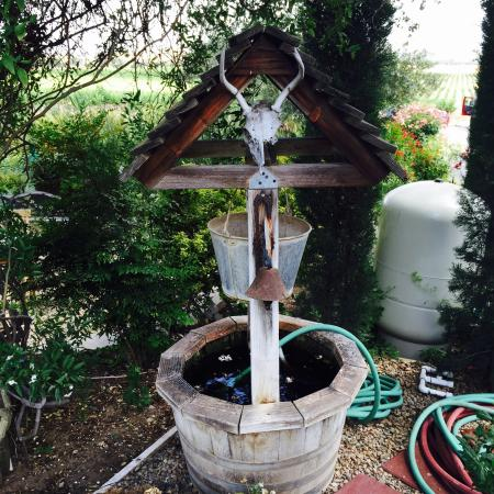Still Waters Vineyards: photo3.jpg