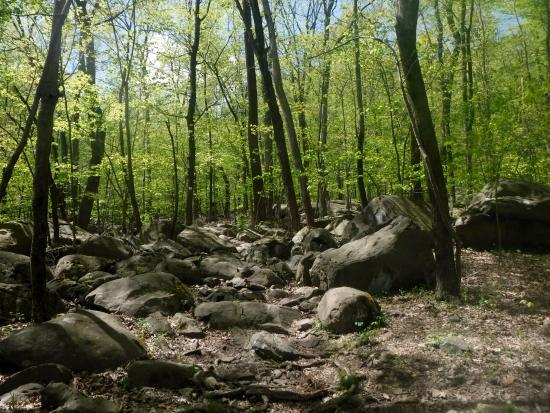 Sourland Mountain Preserve