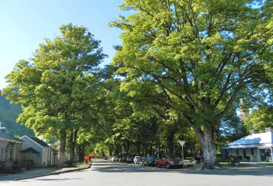 Arrowtown-The avenues of trees were planted in 1867