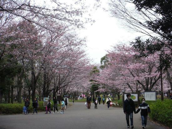 Aobanomori Park