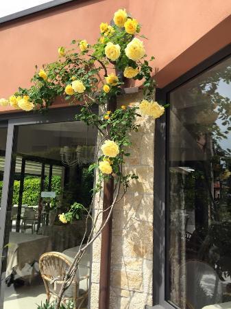 Vizzola Ticino, Italien: Flores
