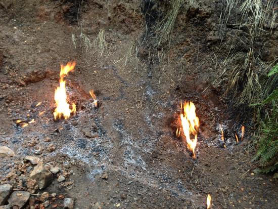 Мерчисон, Новая Зеландия: The natural flames