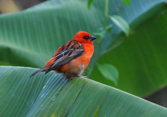 Tamarin: birds in garden