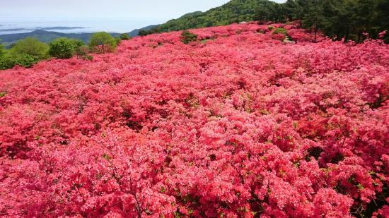 תמונה מKesennuma