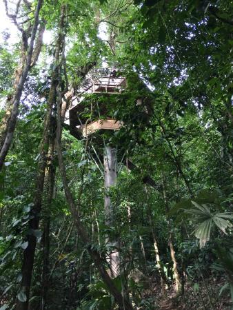 Piedras Blancas, Costa Rica: Finca Bellavista