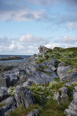 Vardo, Norway: Hornoya
