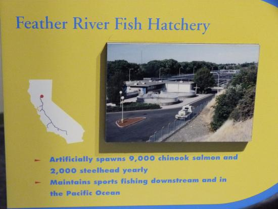 Gorman, Californië: A fish hatchery
