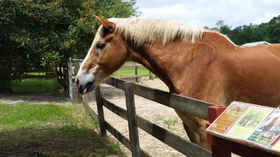Alachua, FL: Horse Farm