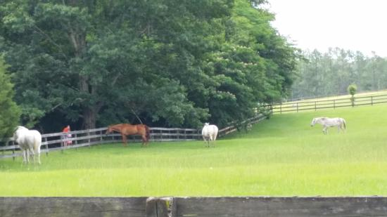 Alachua, FL: These were the blind horses in this pasture.