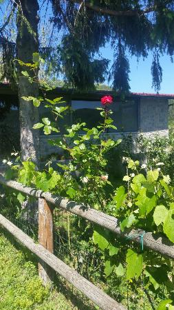 Agriturismo Selvapiana : 20160522_145903_large.jpg