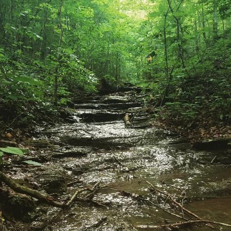 Hilham, Tennessee: Wooded creek on the Lake Trail