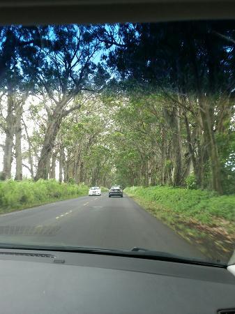 Kalaheo, Havaí: IMG_20160521_110659_large.jpg