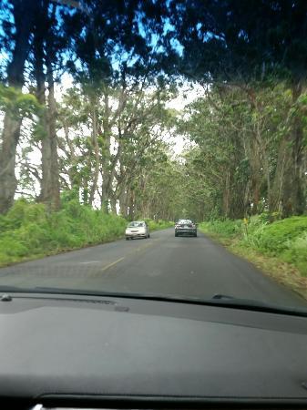 Kalaheo, هاواي: IMG_20160521_110649_large.jpg