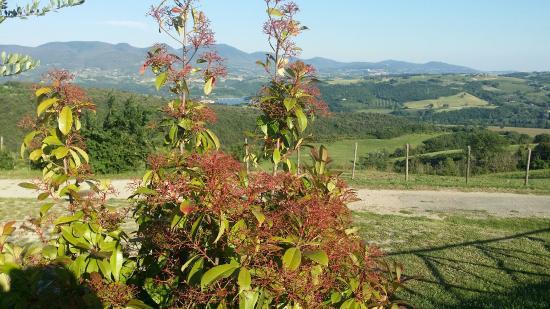 Agriturismo Tenuta di Corbara: Adatto per una vacanza tranquilla in un ambiente familiare, sereno rilassante. Sicuramente da pr