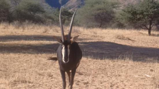 Imagen de Windhoek