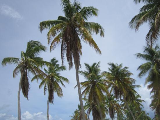Bayahibe, Δομινικανή Δημοκρατία: isola di saona palme