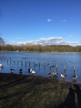Bolton, UK: Geese and swans