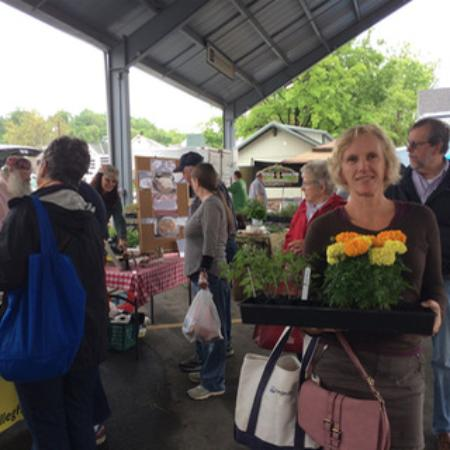 Morgantown, Virginia Barat: Flowers and tomato plants and a bag of tomatoes!