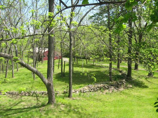 Mount Merino Manor: This is a view of the area behind the main house. Love the stone walls!