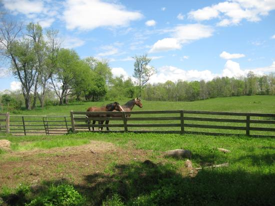 Mount Merino Manor: The Columbia County countryside is beautiful, and there are horse farms in the area.