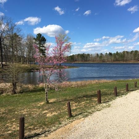 Van Buren, MO: redbud tree blooming