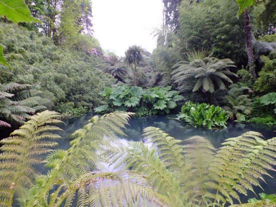 St Austell, UK: Jungle
