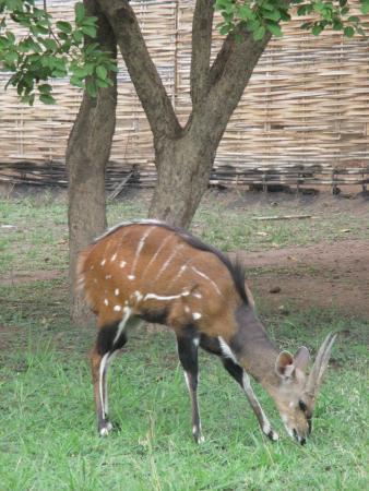 Rumbek, Sør-Sudan: wandering wildlife on the grounds