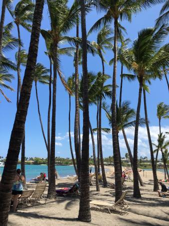 Waikoloa, HI: Lots of palms and lawn chairs to use