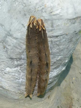Poas Volcano National Park, Costa Rica: Two cocoons side by side