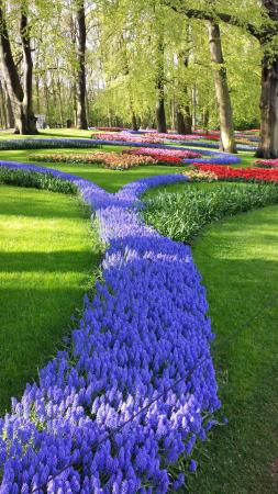 The Netherlands: ПАРК