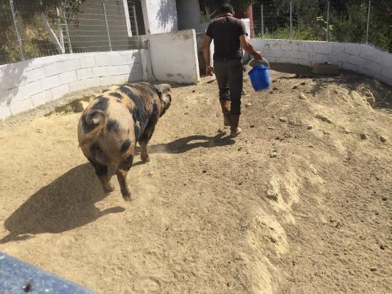 Kamihis Farm