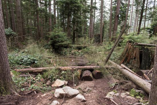 North Vancouver, Canadá: sitting area on the way to norvan falls