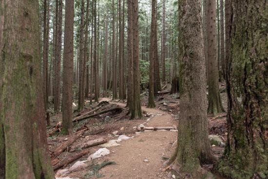 North Vancouver, Canadá: dirt trail on upper lynn loop