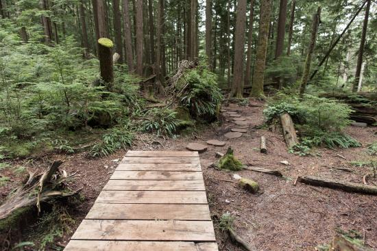 North Vancouver, Canadá: mud area bridge and stepping wood cuts
