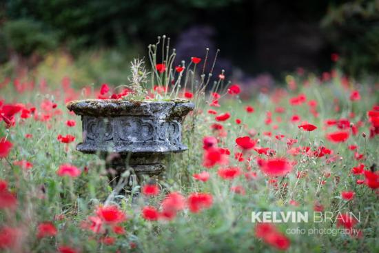 Merthyr Tydfil, UK: Lovely Gardens