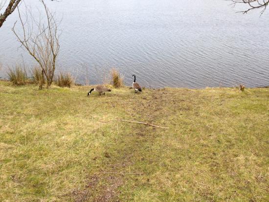 Tredegar, UK: Na beira do lago!