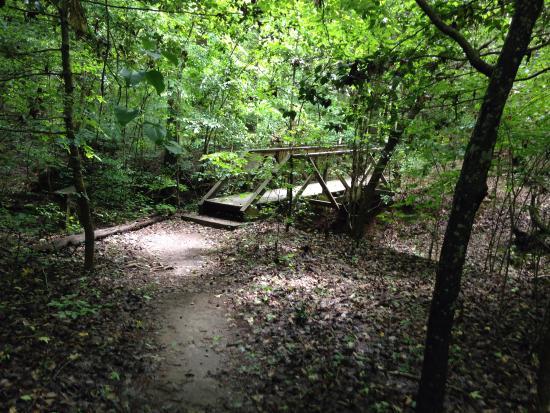Wake Forest, Carolina del Norte: Beautiful trails!