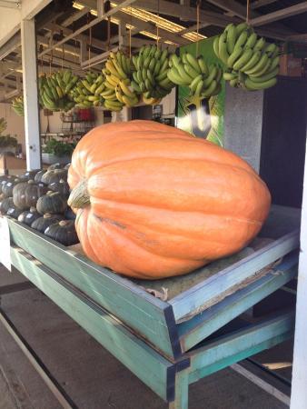 Кофс-Харбор, Австралия: Home of the big pumpkin