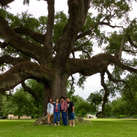 Country Inn & Suites by Radisson, Pineville, LA: My favorite tree in Alexandria we seen while staying in pineville