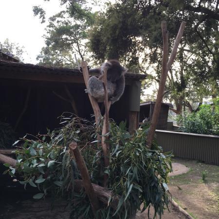 images ballarat wildlife - photo #38
