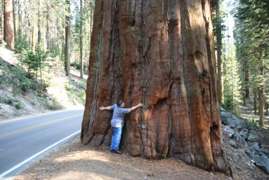 Three Rivers, CA: GET OUT OF THE CAR & HUG A TREE