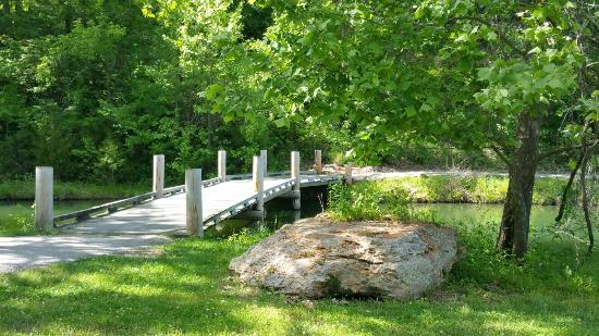 Linn Creek