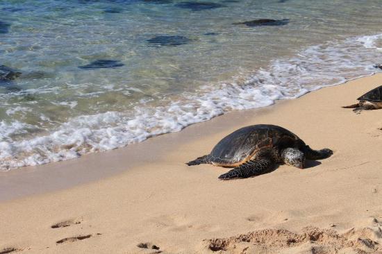 Paia, HI: Ho'opika Beach!
