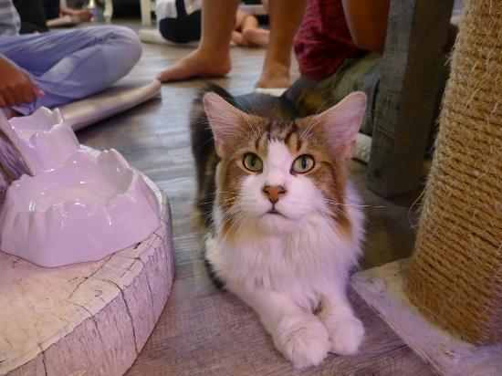 Caturday Cat Cafe Bts