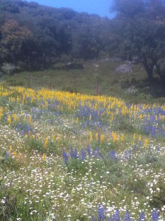 Sierra de Grazalema Natural Park, España: Las flores inundan las praderas del Tambor esta primavera