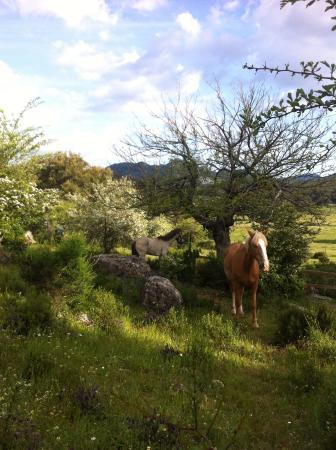 Sierra de Grazalema Natural Park, España: Pastando entre los majuelos floridos del Tambor
